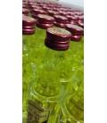 Elixir d'Anvers Box of 100 x 3 cl Miniature Bottles